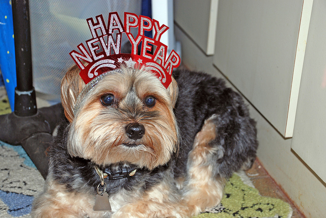 Celebrate New Year's Party With Your Pets